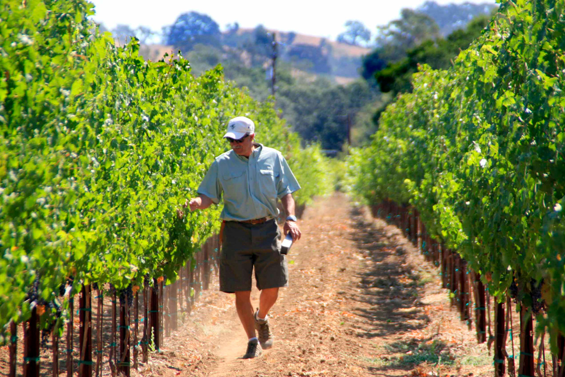 Peter Merriam in his California vineyard. Photos courtesy Merriam Vineyards. For an in-depth visit to Merriam Vineyards, read the Nov/Dec issue of Merriamck Valley Magazine.